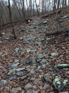 What makes the first part of the course crazy: three miles of rocky trail like this.  When the rocks are wet, very slippery